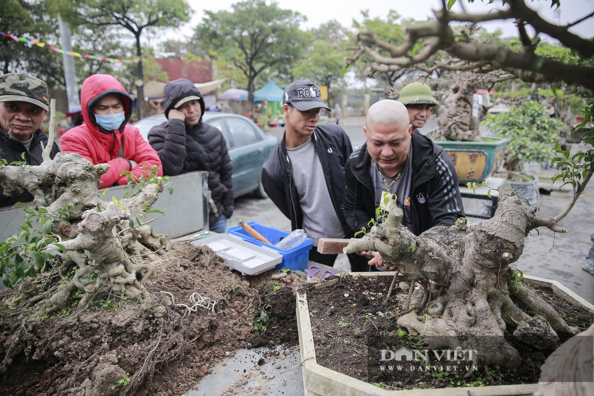 Mãn nhãn với những chậu bonsai quý hiếm tại Festival Sinh vật cảnh Hà Nội - Ảnh 2.