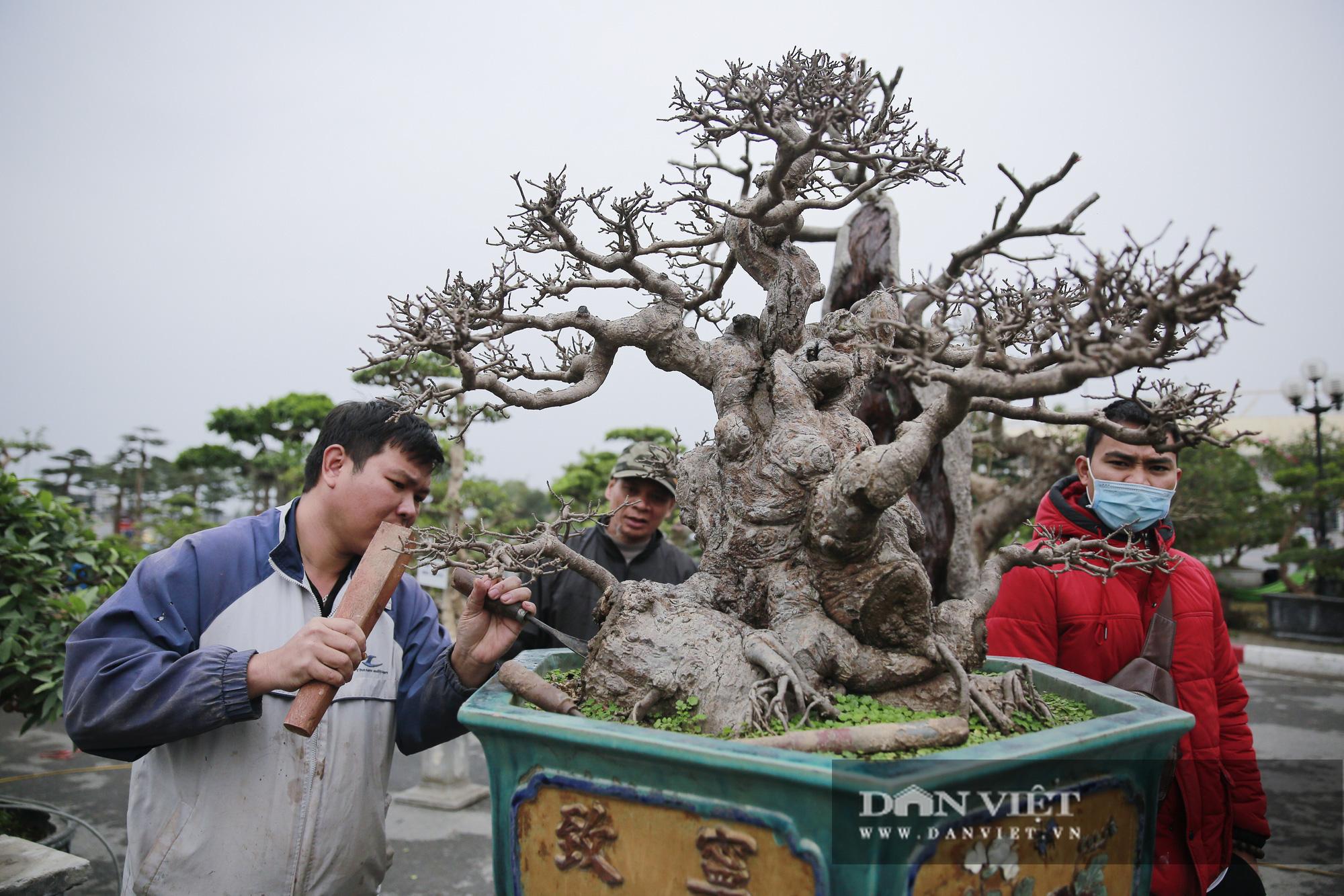 Mãn nhãn với những chậu bonsai quý hiếm tại Festival Sinh vật cảnh Hà Nội - Ảnh 3.