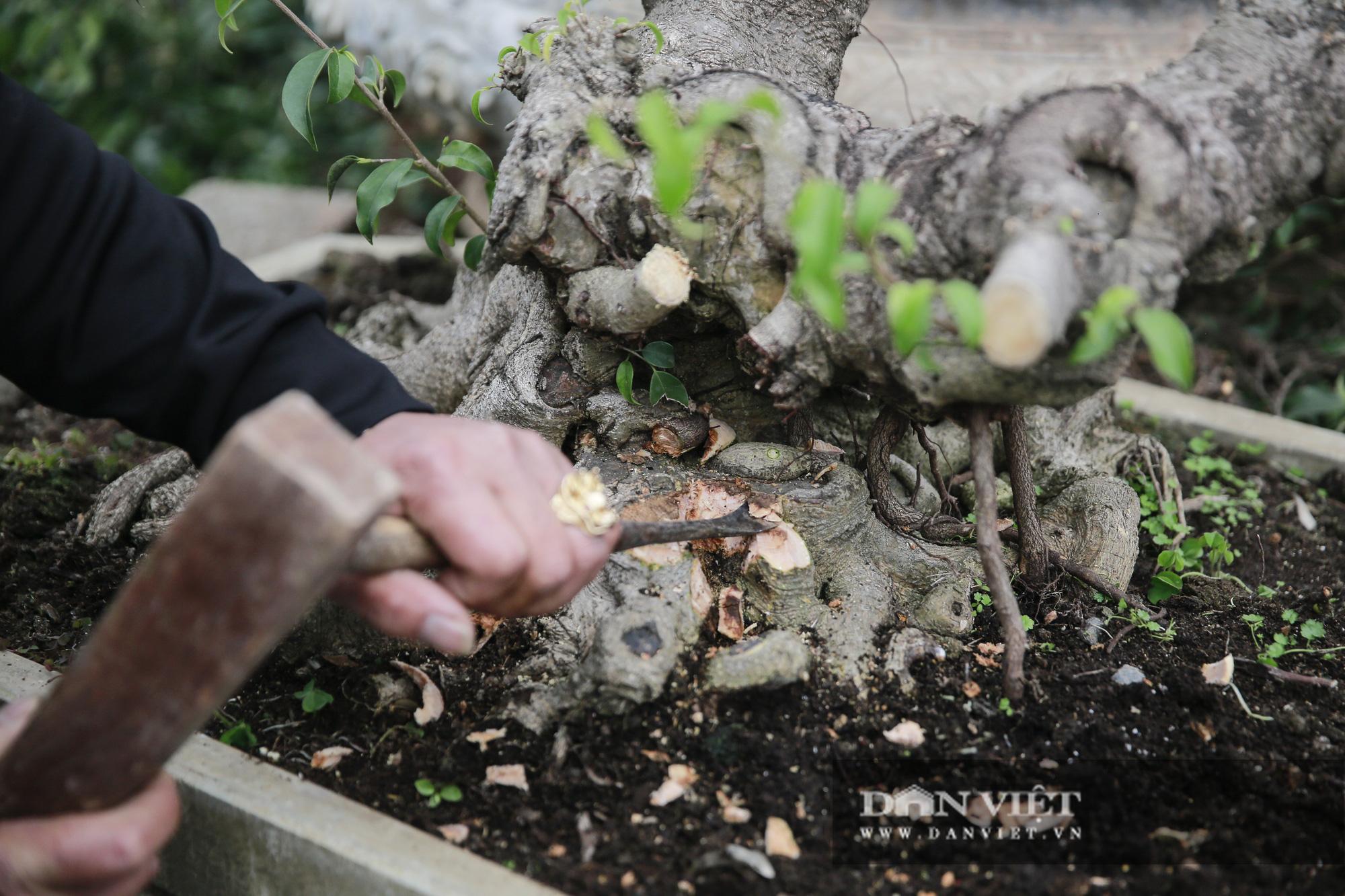 Mãn nhãn với những chậu bonsai quý hiếm tại Festival Sinh vật cảnh Hà Nội - Ảnh 4.