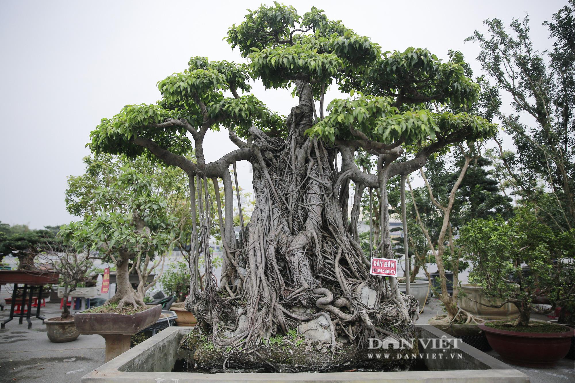 Mãn nhãn với những chậu bonsai quý hiếm tại Festival Sinh vật cảnh Hà Nội - Ảnh 5.