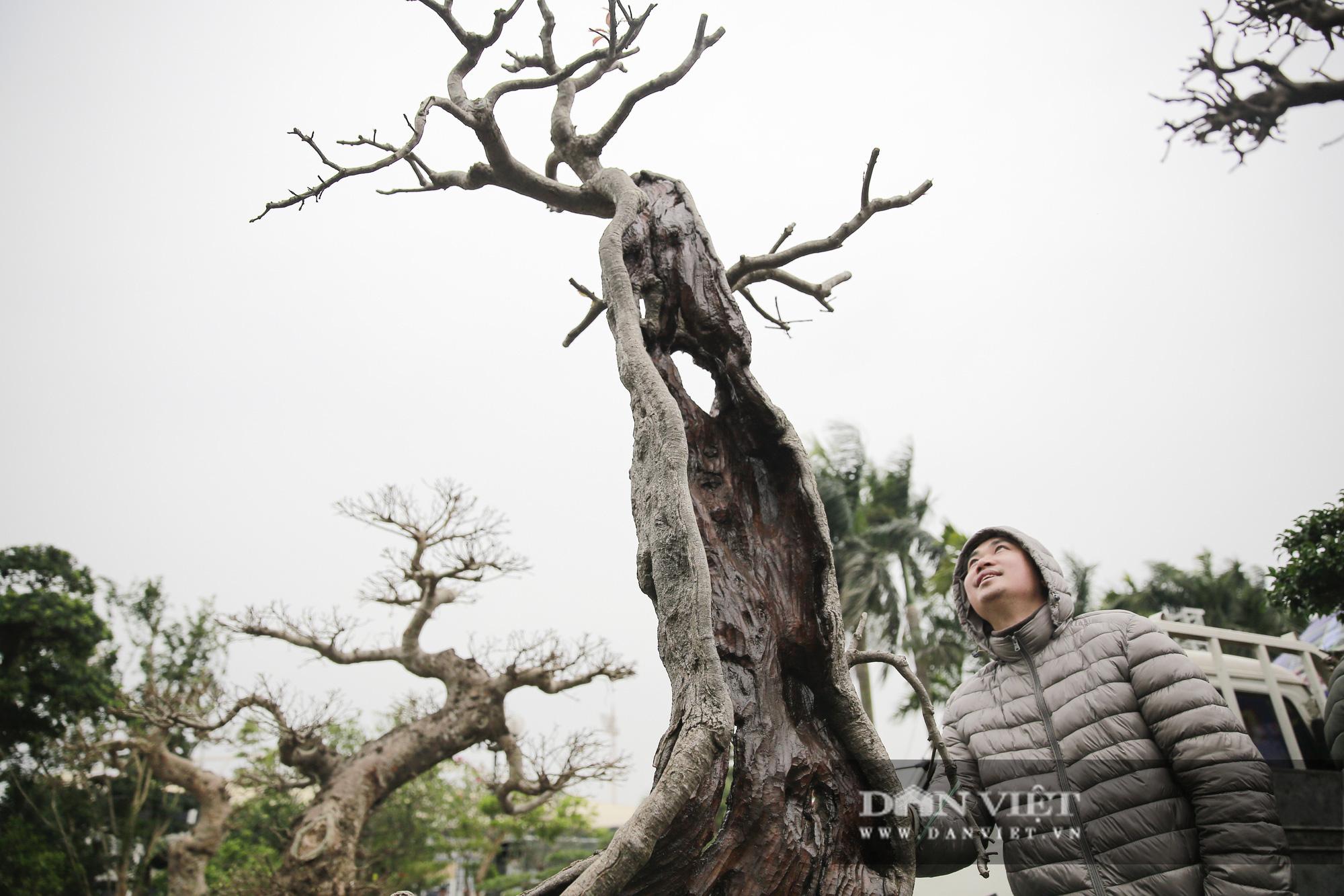 Mãn nhãn với những chậu bonsai quý hiếm tại Festival Sinh vật cảnh Hà Nội - Ảnh 6.