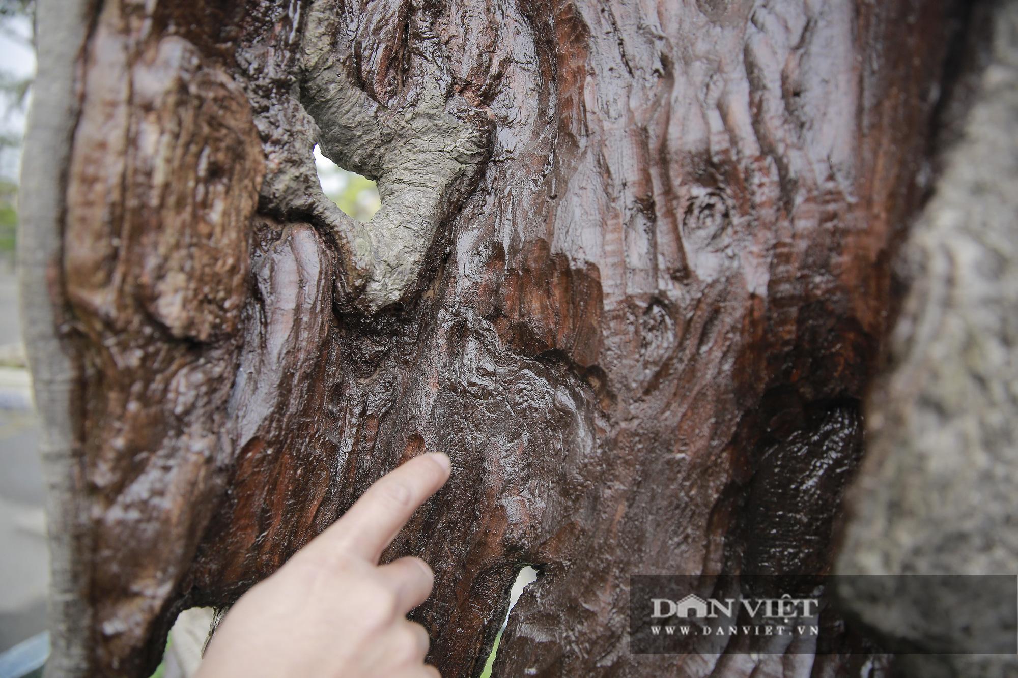 Mãn nhãn với những chậu bonsai quý hiếm tại Festival Sinh vật cảnh Hà Nội - Ảnh 7.