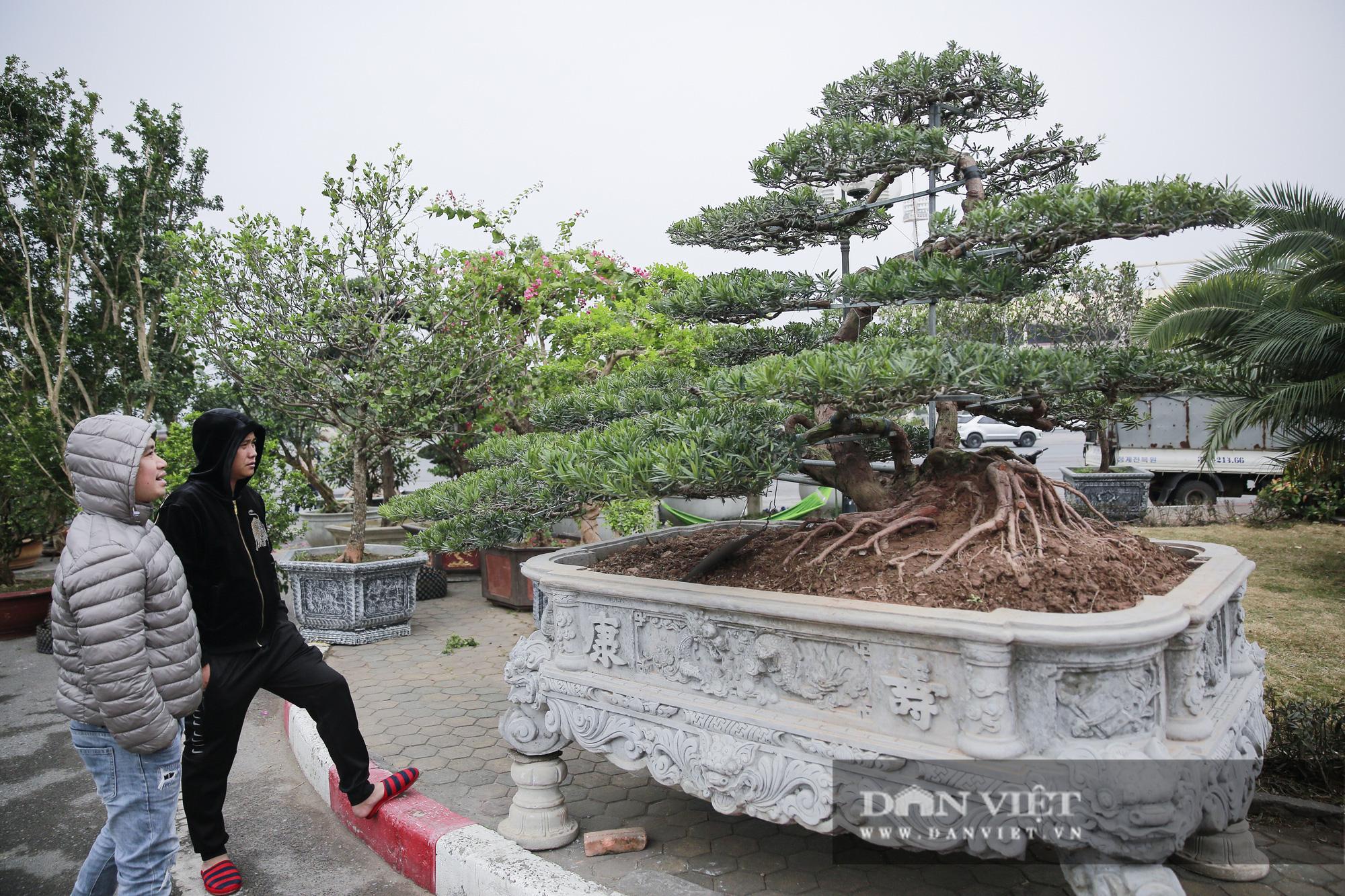 Mãn nhãn với những chậu bonsai quý hiếm tại Festival Sinh vật cảnh Hà Nội - Ảnh 8.