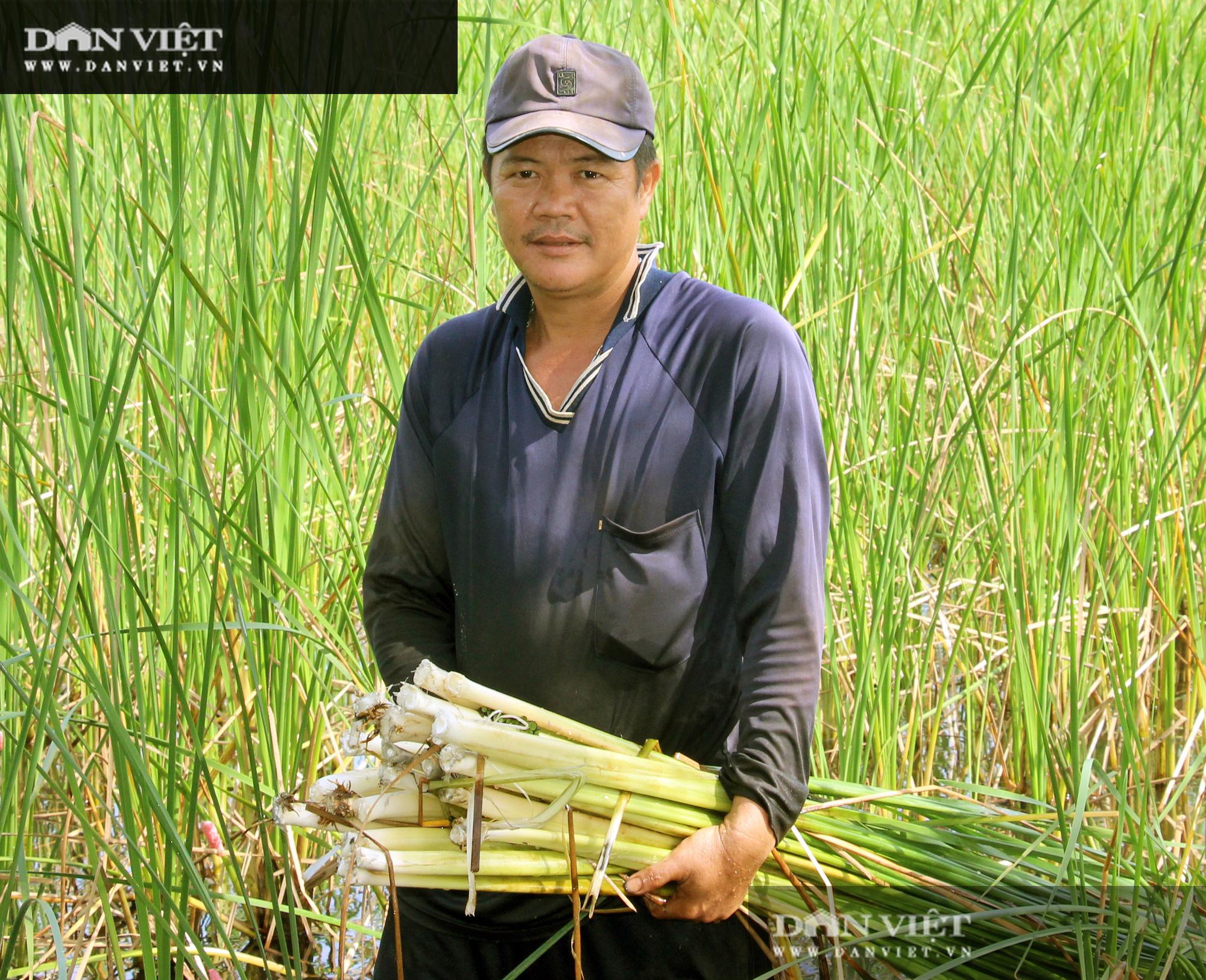 Dân ở vùng đất phèn bỏ túi trăm triệu đồng/năm nhờ lót bạt trồng bồn bồn - Ảnh 2.
