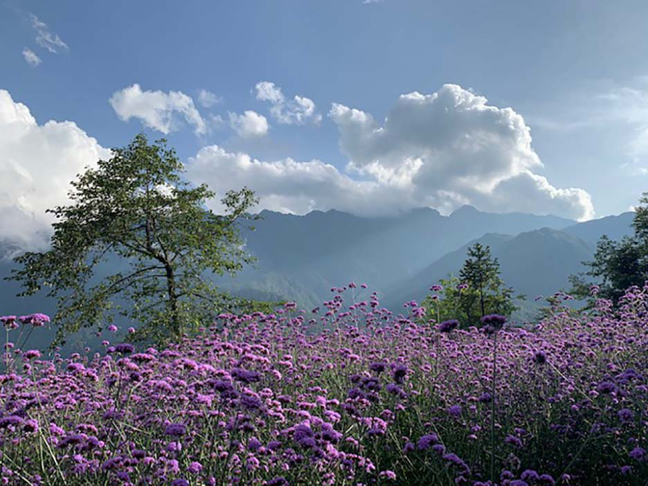 Top 8 địa điểm du lịch Tết với cảnh đẹp và hấp dẫn không thể bỏ qua - Ảnh 2.