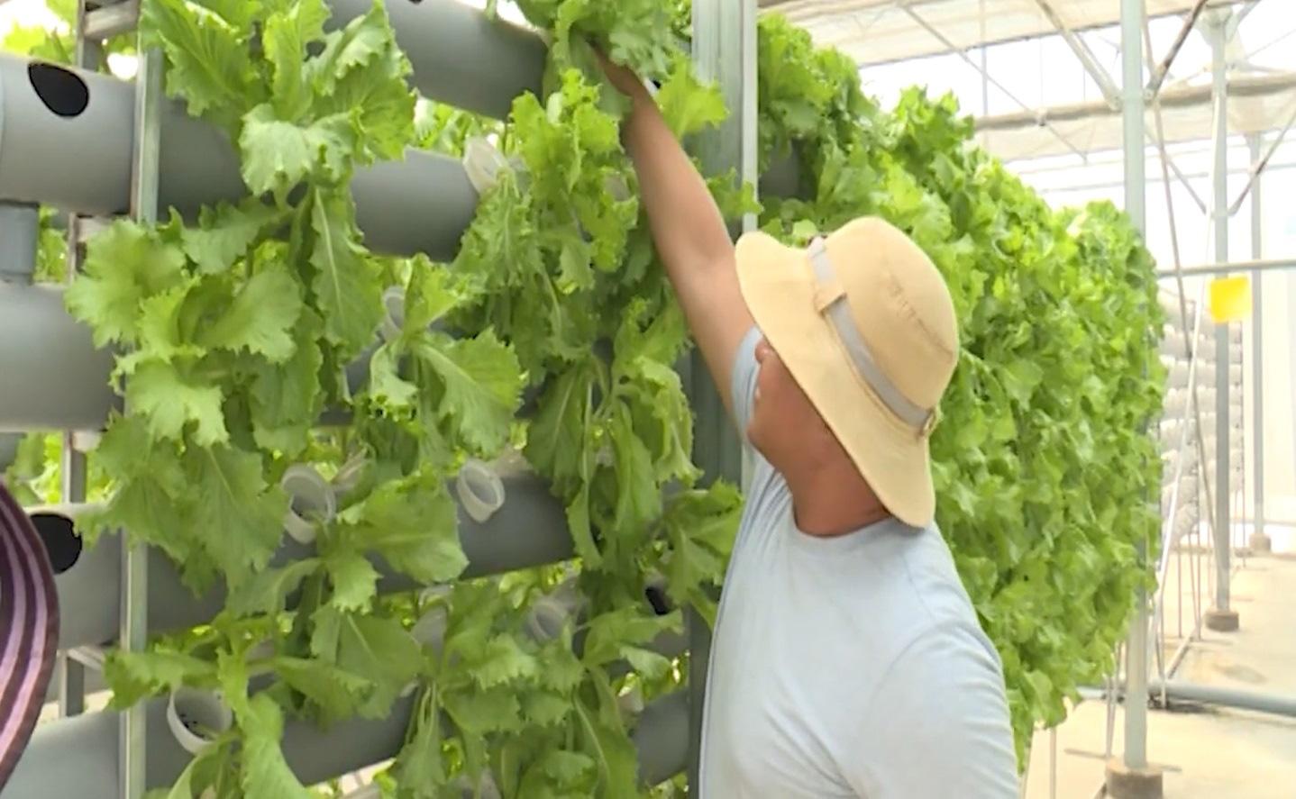 Bình Thuận: Mô hình trồng dâu tây công nghệ cao - Ảnh 4.