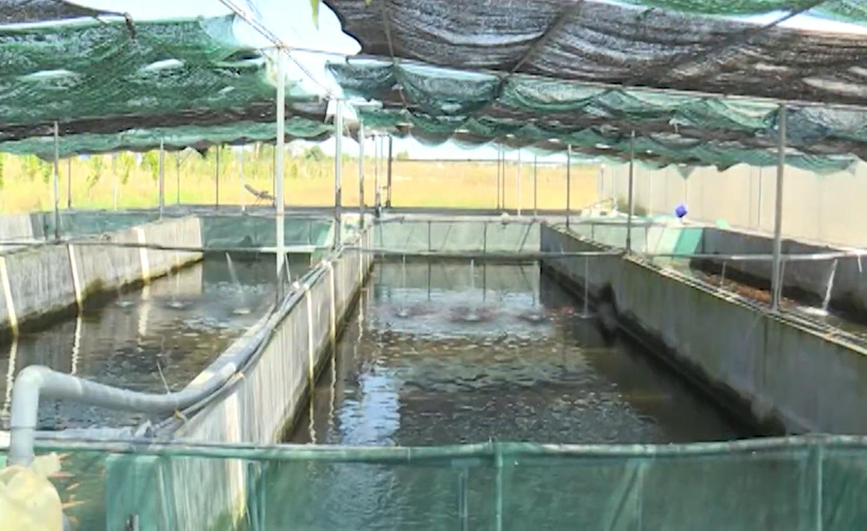 Bình Thuận: Mô hình trồng dâu tây công nghệ cao - Ảnh 5.