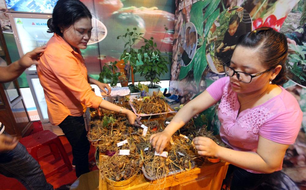 Quảng Nam: Chi 3 tỷ đồng trồng thử nghiệm sâm Ngọc Linh nuôi cấy mô - Ảnh 3.