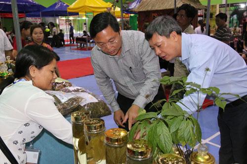 Quảng Nam: Chi 3 tỷ đồng trồng thử nghiệm sâm Ngọc Linh nuôi cấy mô - Ảnh 1.