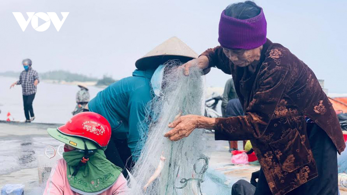 Hà Tĩnh: Loài cá biển ngày xưa chỉ để cho heo, nay trở thành đặc sản, dân đi bắt thu tiền triệu mỗi ngày - Ảnh 3.