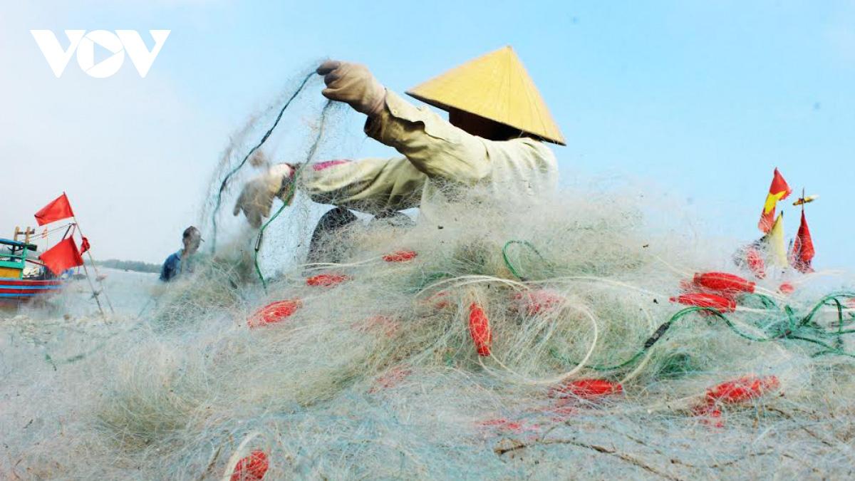 Hà Tĩnh: Loài cá biển ngày xưa chỉ để cho heo, nay trở thành đặc sản, dân đi bắt thu tiền triệu mỗi ngày - Ảnh 4.