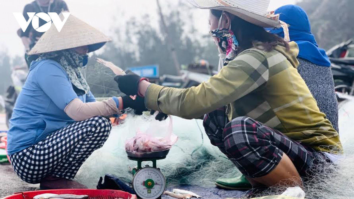 Hà Tĩnh: Loài cá biển ngày xưa chỉ để cho heo, nay trở thành đặc sản, dân đi bắt thu tiền triệu mỗi ngày - Ảnh 6.