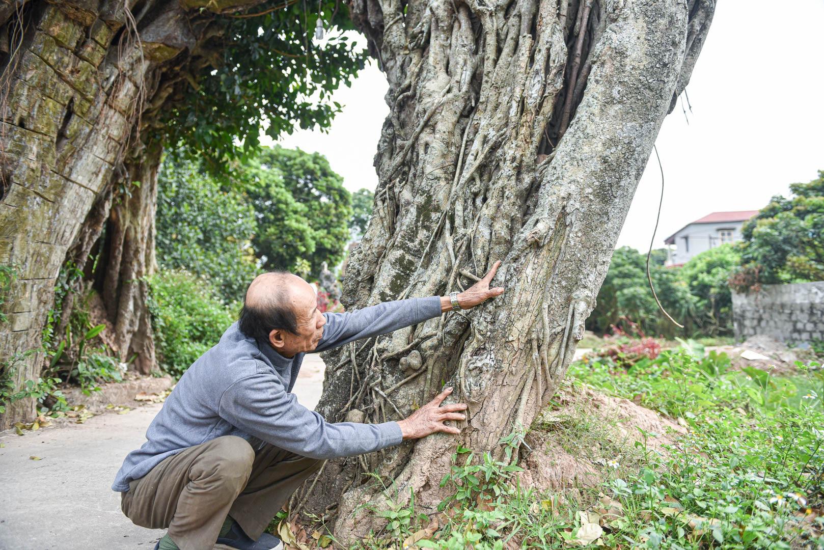 """Cây đa 500 tuổi có bộ rễ khủng tạo thành cổng làng """"độc"""" nhất ở Hưng Yên - Ảnh 3."""