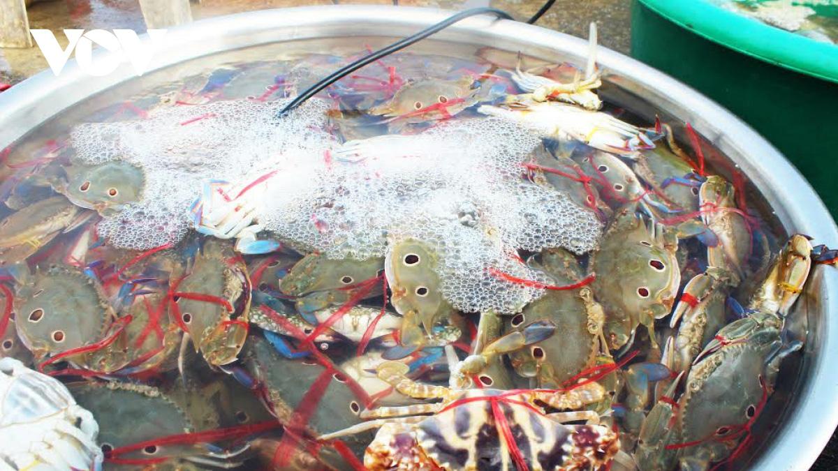 Hà Tĩnh: Loài cá biển ngày xưa chỉ để cho heo, nay trở thành đặc sản, dân đi bắt thu tiền triệu mỗi ngày - Ảnh 7.