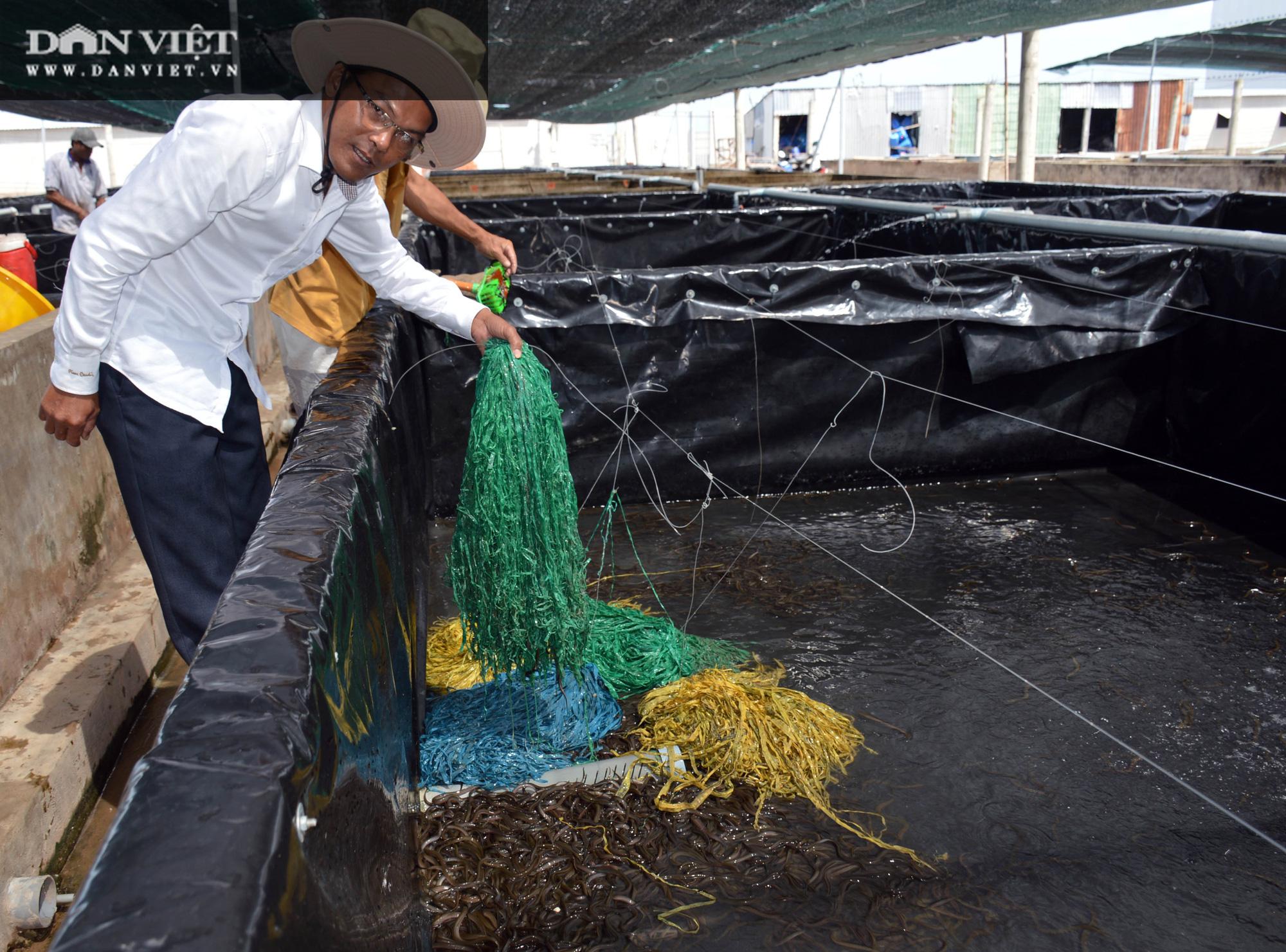 Chàng tỷ phú nông dân nuôi lươn không bùn công nghệ cao, thu lãi 40-50%/vụ - Ảnh 3.