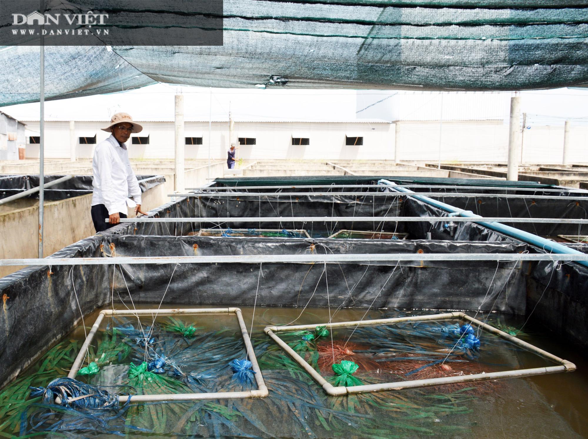 Chàng tỷ phú nông dân nuôi lươn không bùn công nghệ cao, thu lãi 40-50%/vụ - Ảnh 1.