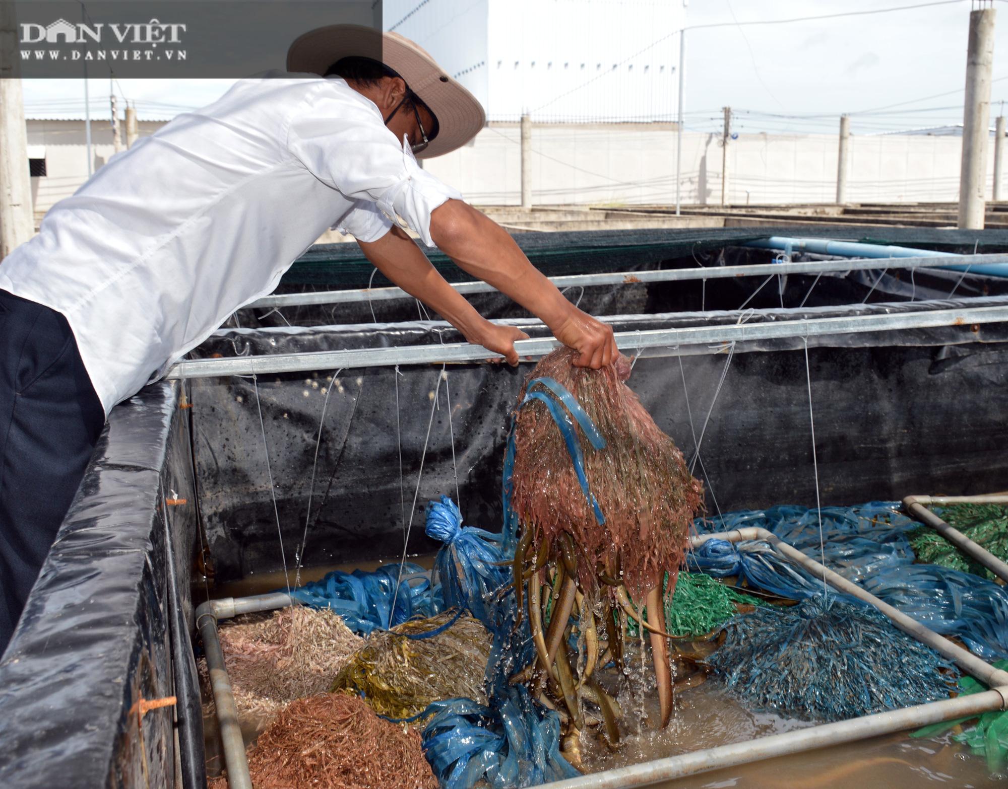 Chàng tỷ phú nông dân nuôi lươn không bùn công nghệ cao, thu lãi 40-50%/vụ - Ảnh 2.