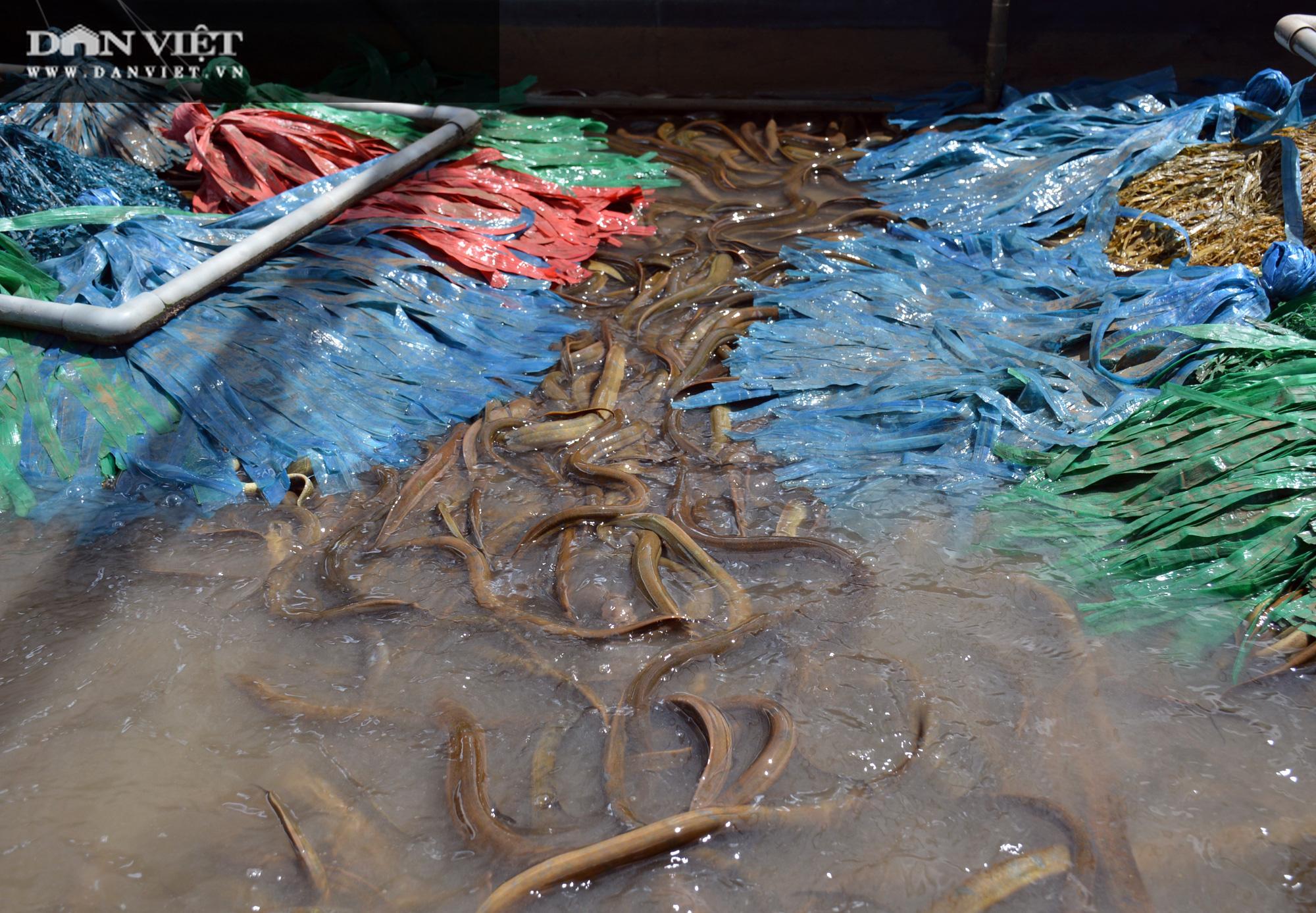 Chàng tỷ phú nông dân nuôi lươn không bùn công nghệ cao, thu lãi 40-50%/vụ - Ảnh 7.