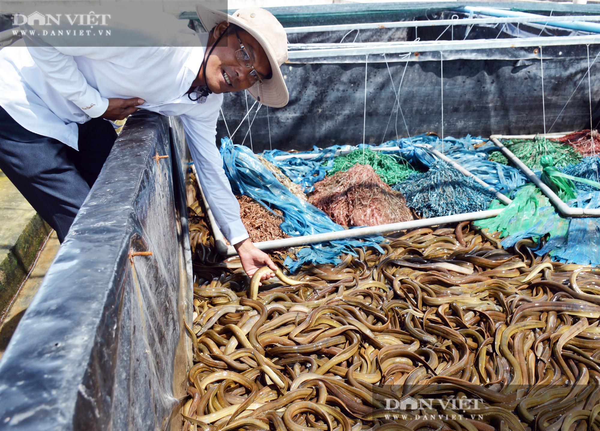 Chàng tỷ phú nông dân nuôi lươn không bùn công nghệ cao, thu lãi 40-50%/vụ - Ảnh 8.