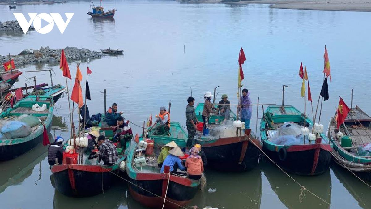 Hà Tĩnh: Loài cá biển ngày xưa chỉ để cho heo, nay trở thành đặc sản, dân đi bắt thu tiền triệu mỗi ngày - Ảnh 1.