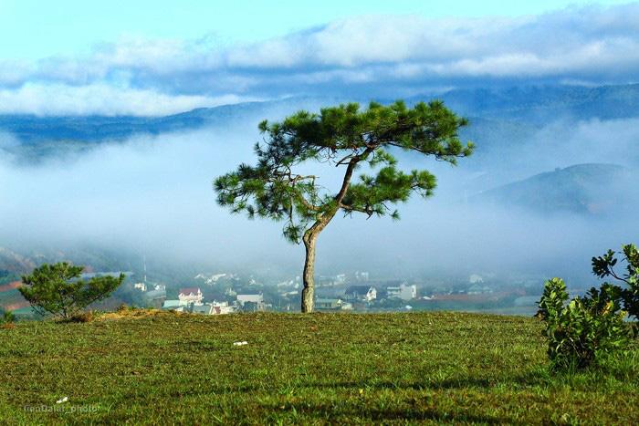 Loạt điểm đến trong mơ chớ nên bỏ lỡ khi ghé thăm Đà Lạt trong mùa xuân này - Ảnh 2.