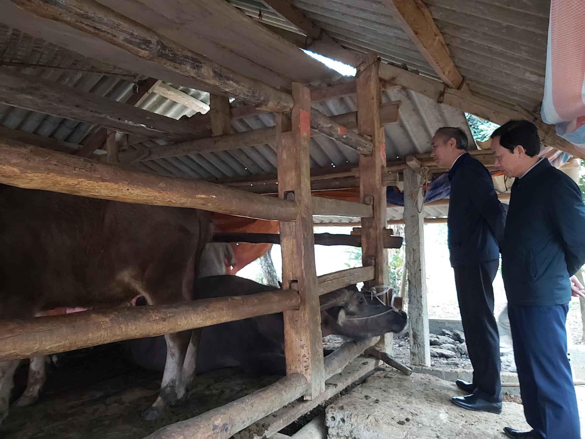 Chủ động phòng, chống đói rét cho đàn gia súc, Hà Giang giảm thiểu tối đa thiệt hại - Ảnh 2.