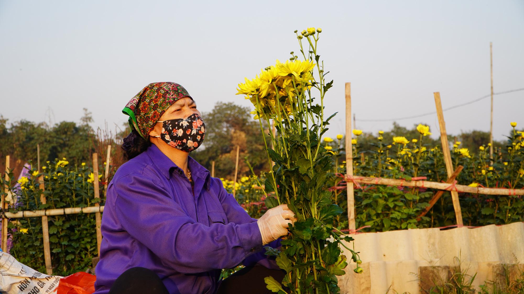 """Thời tiết tết 2021: Nông dân trồng hoa liệu có như """"đánh bạc"""" - Ảnh 4."""