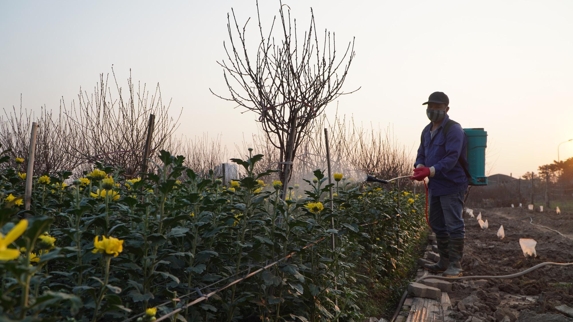 """Thời tiết tết 2021: Nông dân trồng hoa liệu có như """"đánh bạc"""" - Ảnh 3."""