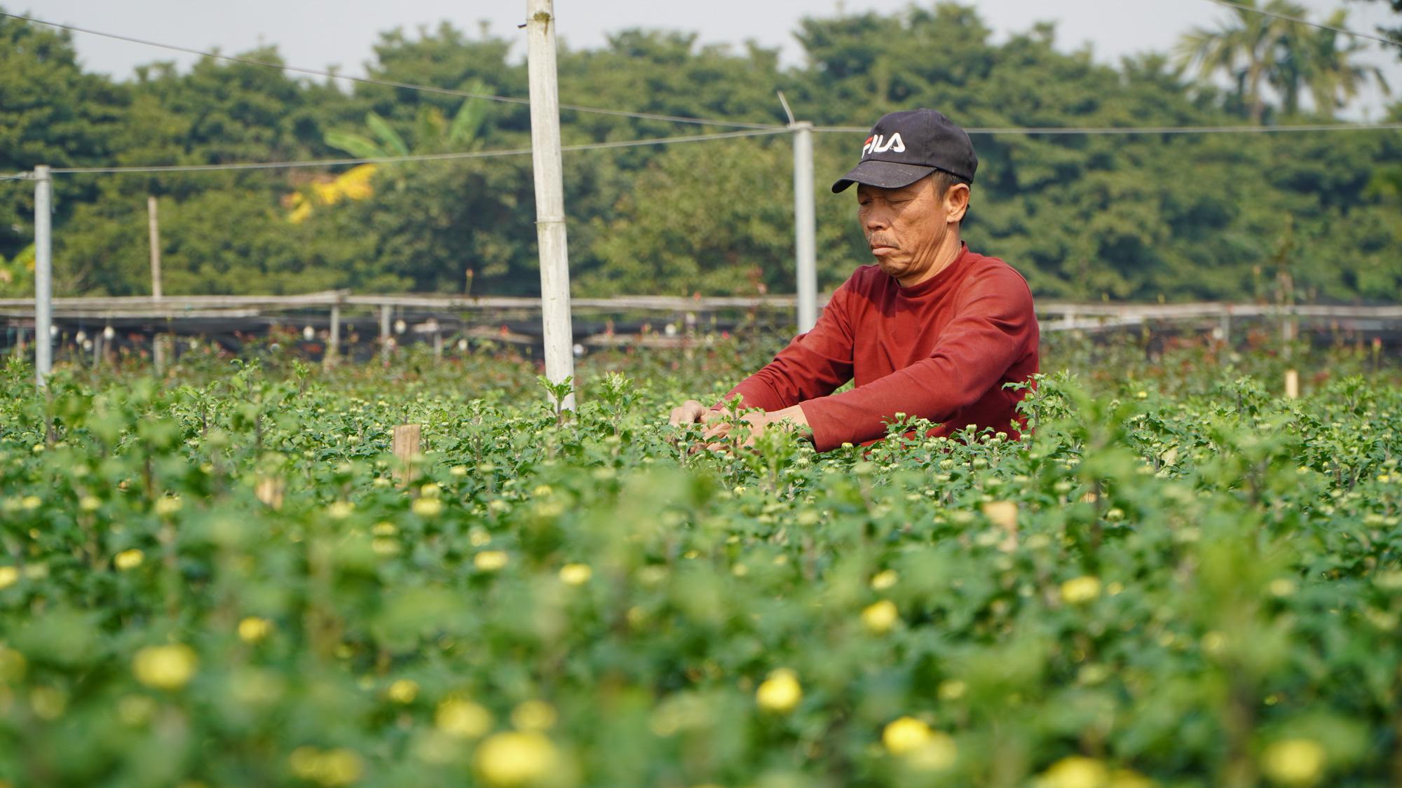 """Thời tiết tết 2021: Nông dân trồng hoa liệu có như """"đánh bạc"""" - Ảnh 2."""
