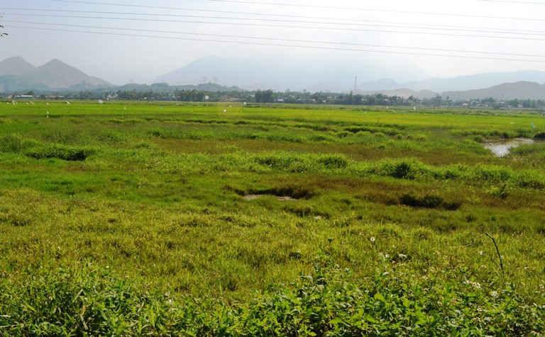 """Giá đất nông nghiệp Đà Nẵng """"lao dốc"""" chỉ vài chục ngàn/m2 - Ảnh 2."""