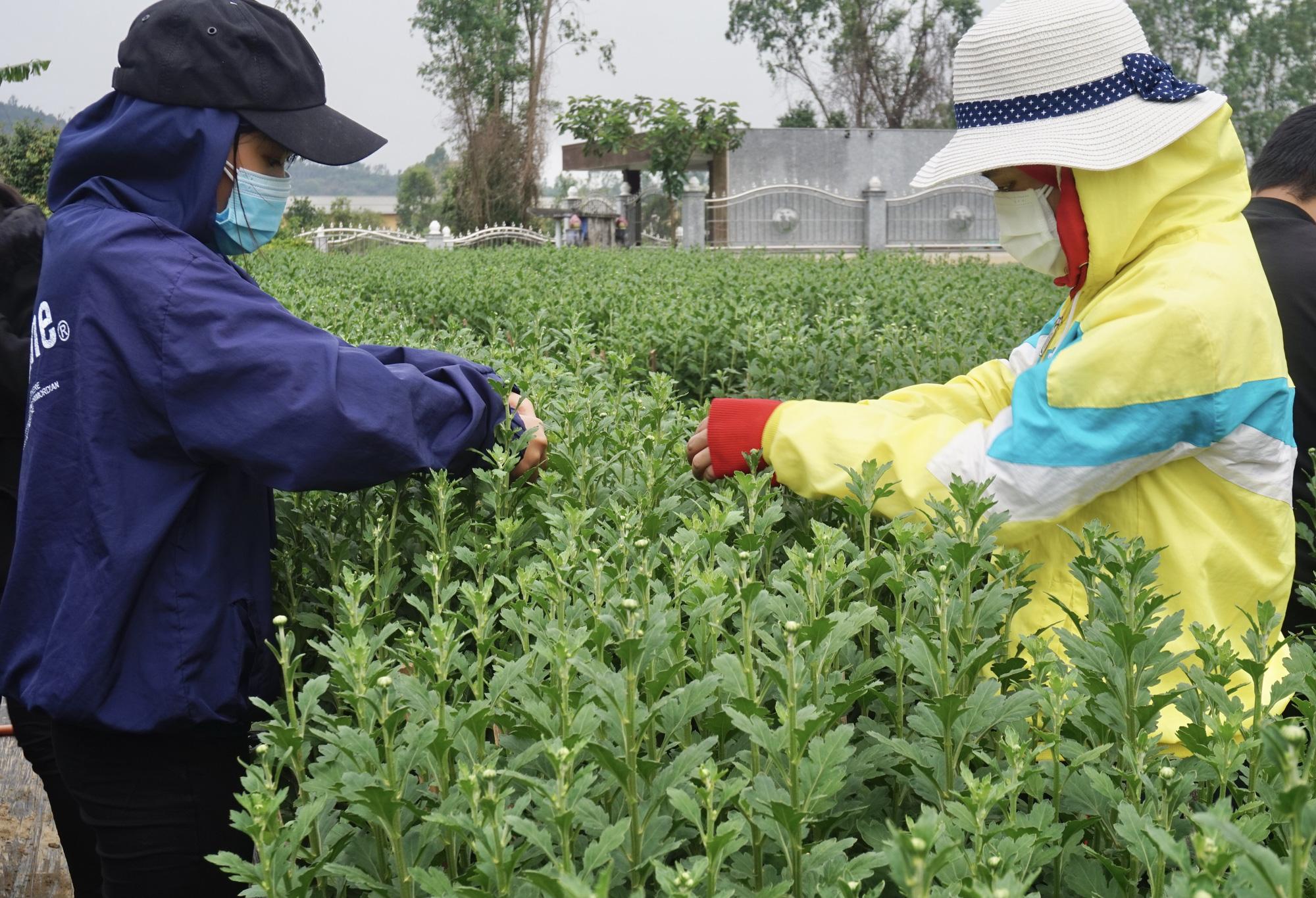 Đà Nẵng: Sinh viên làm nông kiếm tiền triệu dịp Tết Nguyên đán 2021 - Ảnh 2.