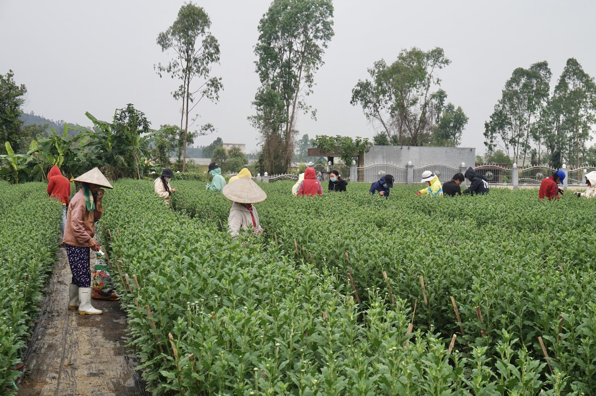 Đà Nẵng: Sinh viên làm nông kiếm tiền triệu dịp Tết Nguyên đán 2021 - Ảnh 4.