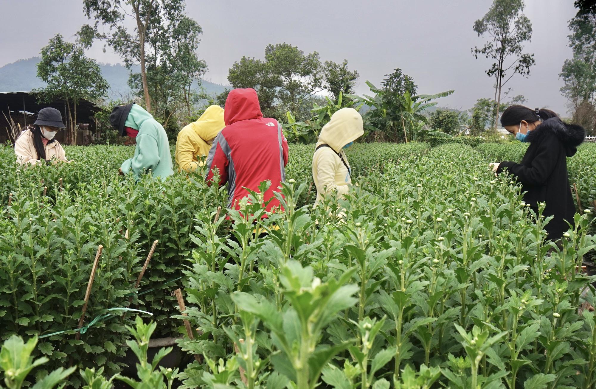 Đà Nẵng: Sinh viên làm nông kiếm tiền triệu dịp Tết Nguyên đán 2021 - Ảnh 5.