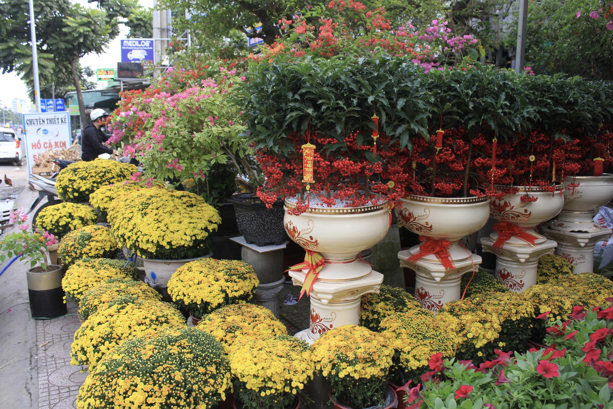 Hoa kiểng Tết đã bán tại Sài Gòn, tranh thủ giá rẻ, nhiều người đi mua sớm - Ảnh 6.