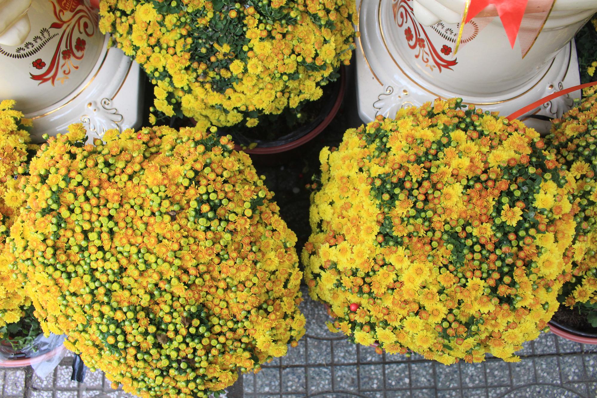 Hoa kiểng Tết đã bán tại Sài Gòn, tranh thủ giá rẻ, nhiều người đi mua sớm - Ảnh 4.