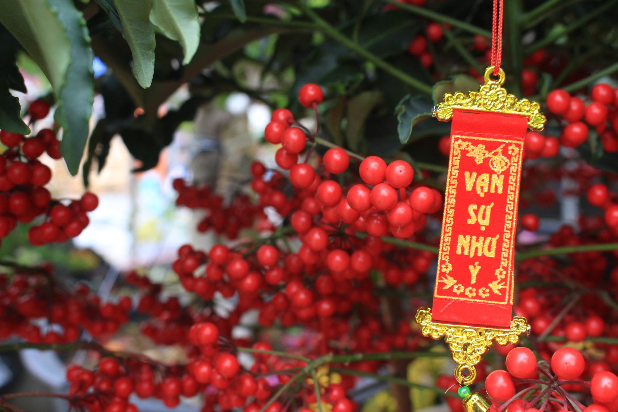 Hoa kiểng Tết đã bán tại Sài Gòn, tranh thủ giá rẻ, nhiều người đi mua sớm - Ảnh 8.