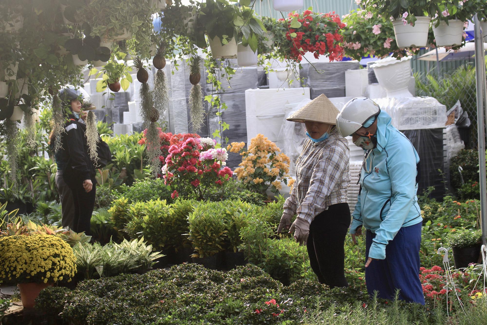Hoa kiểng Tết đã bán tại Sài Gòn, tranh thủ giá rẻ, nhiều người đi mua sớm - Ảnh 2.