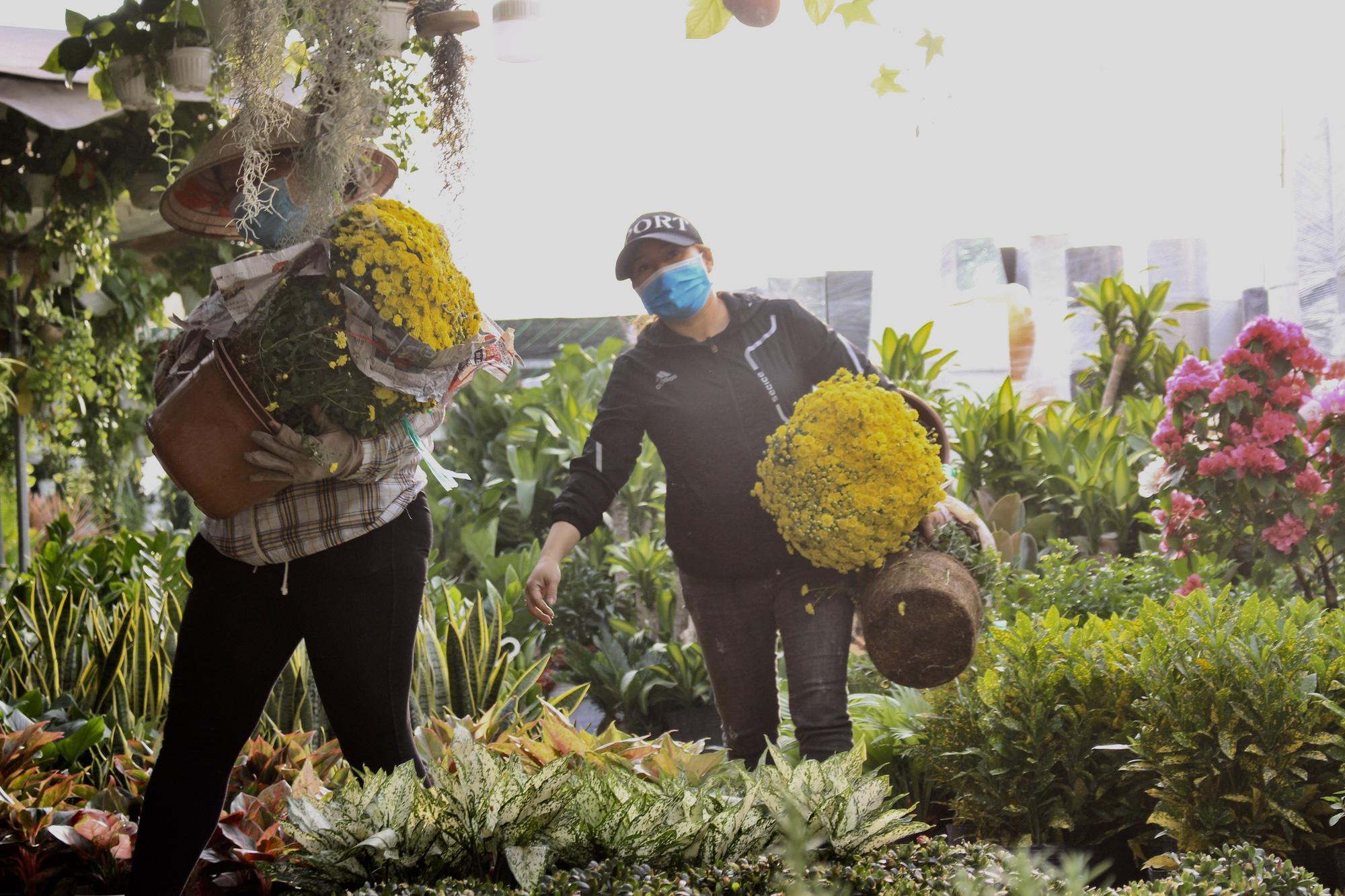 Hoa kiểng Tết đã bán tại Sài Gòn, tranh thủ giá rẻ, nhiều người đi mua sớm - Ảnh 3.