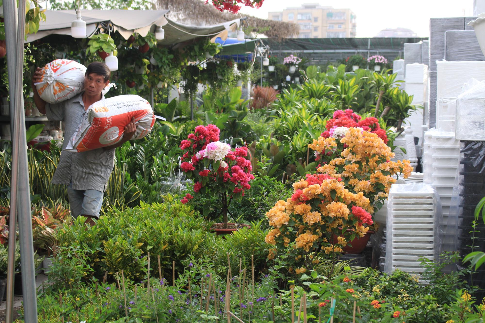 Hoa kiểng Tết đã bán tại Sài Gòn, tranh thủ giá rẻ, nhiều người đi mua sớm - Ảnh 12.