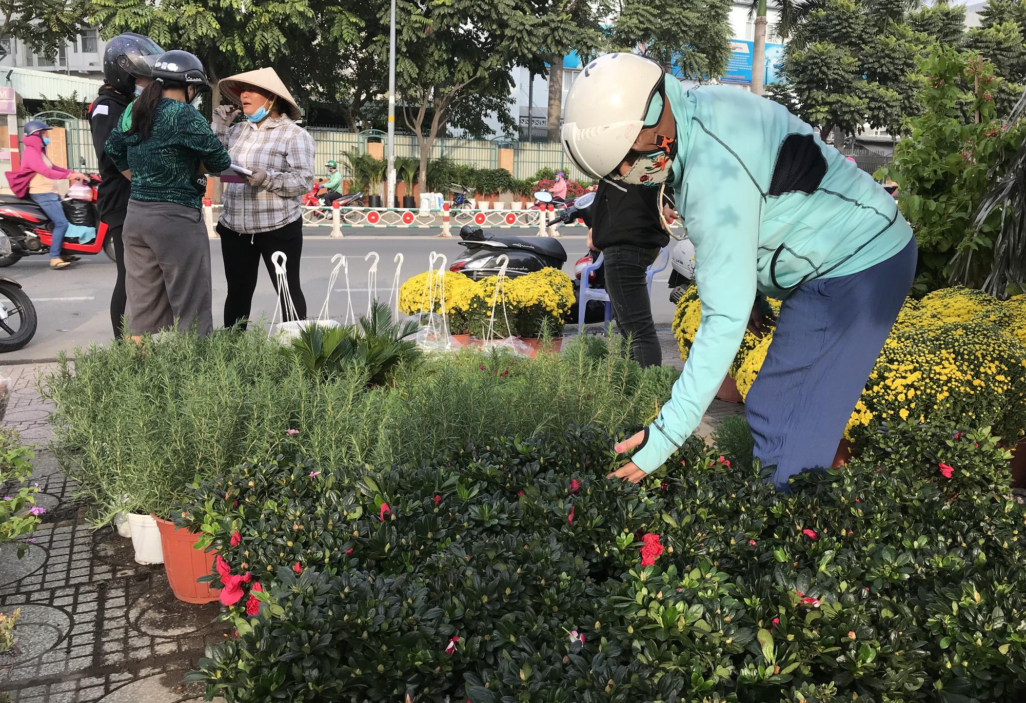 Hoa kiểng Tết đã bán tại Sài Gòn, tranh thủ giá rẻ, nhiều người đi mua sớm - Ảnh 5.