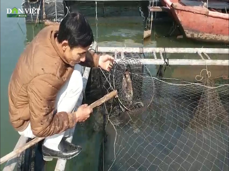 Cá song, cá giò chết nổi trắng mặt nước cả chục tấn, nông dân Quảng Yên lo mất Tết - Ảnh 2.