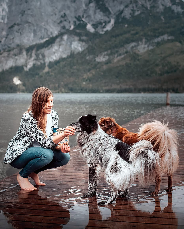 Hai con chó đi du lịch khắp châu Âu - Ảnh 1.