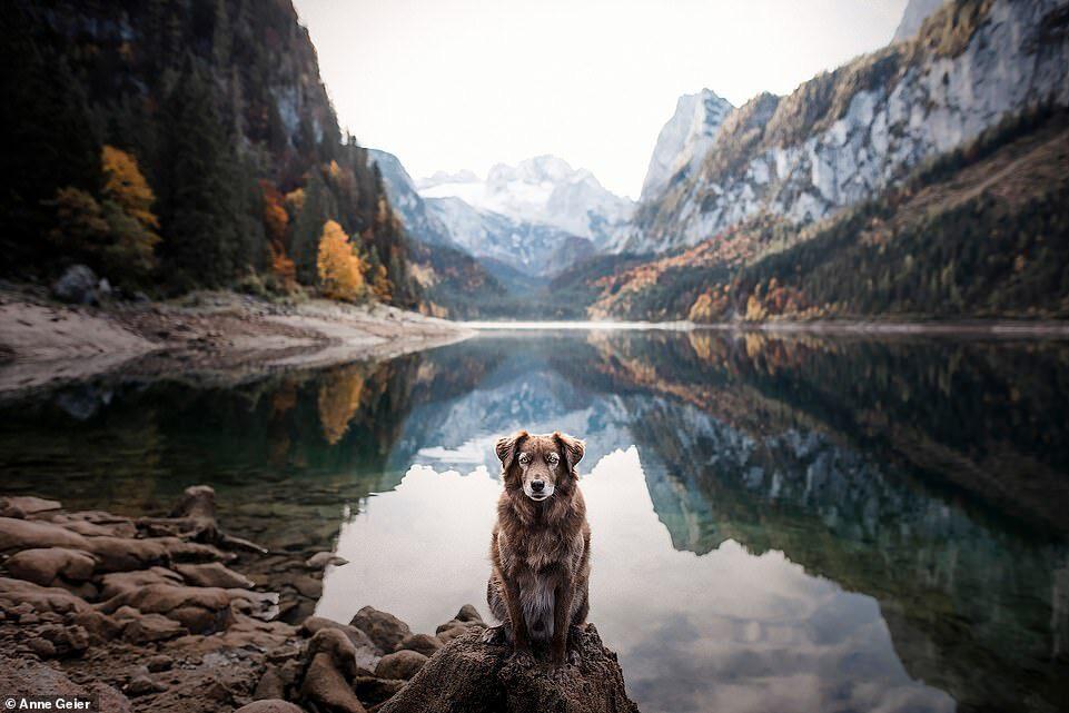 Hai con chó đi du lịch khắp châu Âu - Ảnh 4.