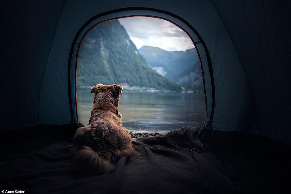 Hai con chó đi du lịch khắp châu Âu - Ảnh 6.