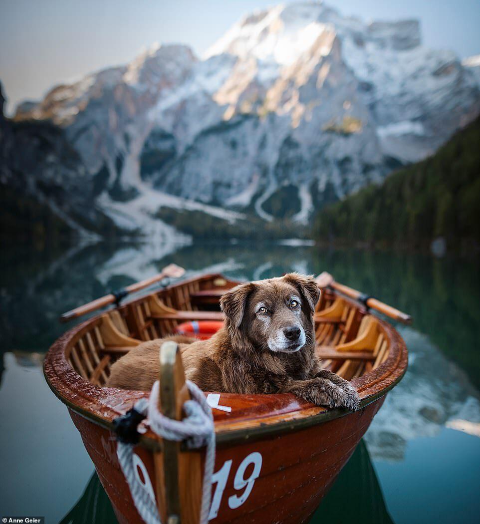 Hai con chó đi du lịch khắp châu Âu - Ảnh 7.
