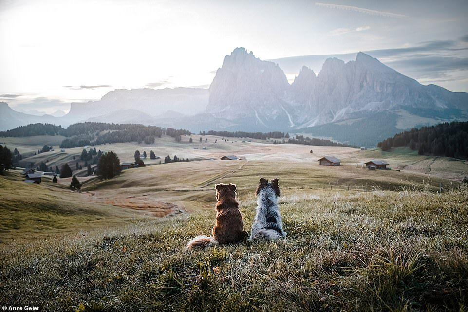Hai con chó đi du lịch khắp châu Âu - Ảnh 8.