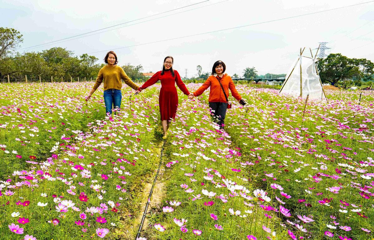 Bình Định: Loài hoa nhuốm màu huyền thoại ở tỉnh Hà Giang bất ngờ xuất hiện ở Phù Cát, nhiều người thích thú - Ảnh 4.