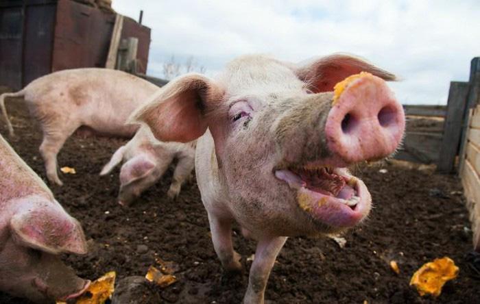 Giá nông sản hôm nay (21/1): Lợn hơi nhích nhẹ, cà phê đỏ rực trong ngày Tổng thống Mỹ nhậm chức - Ảnh 1.
