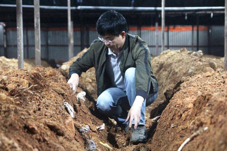 Một ông tiến sỹ ở tỉnh Lâm Đồng vừa trồng thành công loài nấm quý gì mà ví như thần dược ngàn năm? - Ảnh 1.