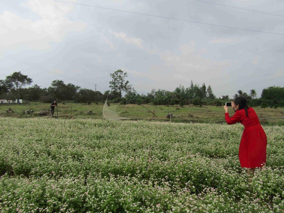 Bình Định: Loài hoa nhuốm màu huyền thoại ở tỉnh Hà Giang bất ngờ xuất hiện ở Phù Cát, nhiều người thích thú - Ảnh 11.